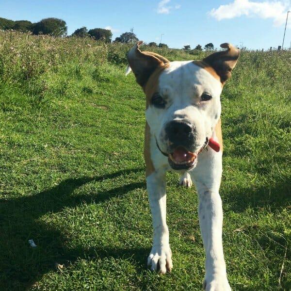 Obelix dog services in Brighton and Hove